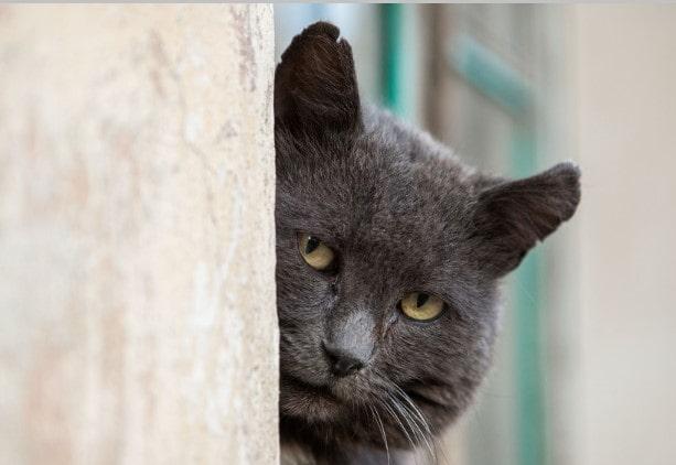 """Сериал """"Черная кошка"""" содержание серий"""